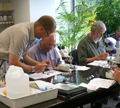 A workshop at the National Biodiversity Data Centre